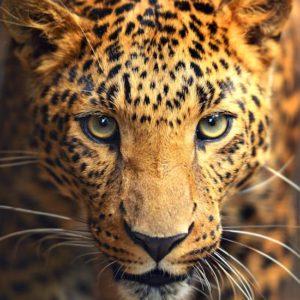 sh_animals-15