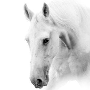 sh_animals-80